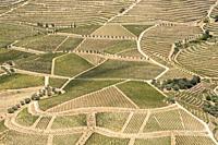 vineyards and the Douro River, Alto Douro Wine Valley.