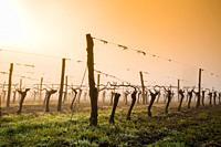 Landscape of armagnac vineyards. Lannepax. Le Gers Department, New Aquitaine, Midi Pyerenees. France Europe.