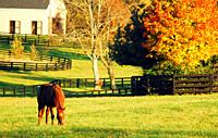 A horse grazes in a field surrounded by autumn color in the Blue Grass region of Kentucky.