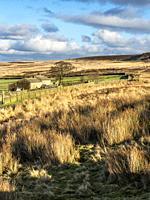 Farm by the Bronte Way on Haworth Moor near Haworth West Yorkshire England.