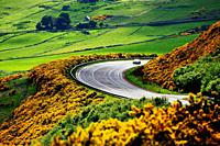 A9 main trunk road climbs 2 miles north of Helmsdale, Sutherland on Scotlands N. E. coast. Looking south over early summer yellow gorse and farmland.