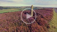 Fryup Dale, North Yorkshire Moor National Park, England, low shot tracking across ground rising to see summer flowering heather moorland and Eskdale, ...