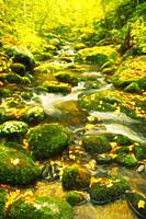 Impressionist art of autumn along the Roaring Fork Creek, Great Smoky Mountains National Park, Tennessee, United States.