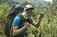 Marijuana grows like a wild weed in the Himalayas, Manaslu Circuit, Nepal.