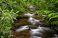 Avery Creek - Pisgah National Forest, near Brevard, North Carolina, USA.