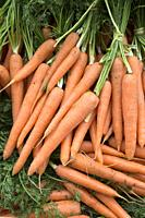 Carrot Background on Market Stall.