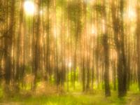 Forest and light spots photographed with a monocle.
