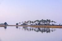 Picnic pond at dawn, St. Marks NWR, Florida, USA.