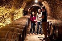 Guide with tourists, Cellar wine barrels, Rioja Alavesa, Araba, Basque Country, Spain, Europe