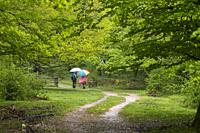 People walking in a beech wood. Parque Natural Sierra de Urbasa. Navarra. Spain.