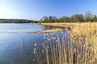 View over lake with reed and oak trees in spring season Södermanland, Sweden.