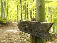 Wooden sign of Font Rupitosa fountain, Matagalls peak surroundings. spring time beech forest (Fagus sylvatica) at Viladrau village countryside. Montse...