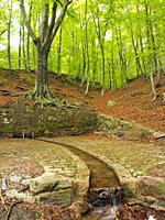 Font Bona Fountain site and beech forest (Fagus sylvatica), Sant Marçal area. Springtime at Montseny Natural Park. Barcelona province, Catalonia, Spai...