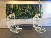 Two wicker seats swing from the ceiling of a trendy cafe against the backdrop of a wall panel with live plants, Maui, Hawaii, USA.