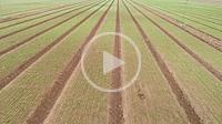 Field planted. Aerial view. Almansa. Albacete province