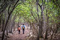 camino de la Fita del Ram, Esporles, Paraje natural de la Serra de Tramuntana, Mallorca, balearic islands, Spain.