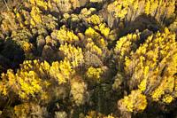 Aerial view of trees in golden autumn colors. Bitsevski Park (Bitsa Park), Moscow, Russia.