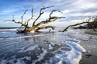 Low tide landscape at Driftwood Beach - Jekyll Island, Georgia, USA.