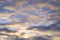 Altocumulus at sunset.
