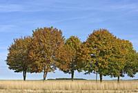 route de campagne bordee d'arbres, departement d'Eure-et-Loir, region Centre-Val de Loire, France, Europe/tree-lined country road, Eure-et-Loir depart...