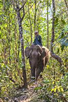 Laos, Sainyabuli, Elephant Conservation Center, Asian elephant, elephas maximus, and mahout, MR-LAO-ECC-18-004.