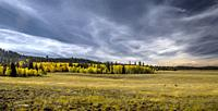 Fall colors have arrived to the Kaibab National Forest in Northern Arizona.