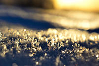 Frost crystals are shimmering in the golden light of the low winter sun on a cold day in northern Sweden.