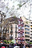Child completing the human tower (torre humano) being performed on the day of Sant Jordi (April 23) - Catalonia, Spain.