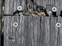 Piece of an old boarwalk or fishing jetty. Showing the errosion of the wood over many years. held together with modern bolts and fasteners. Australia.
