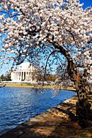 Cherry Blossom time at the Tidal Basin in Washington DC.