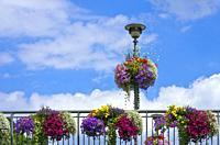 Colourful flowers on a bridge railing and lantern, Tubingen, Baden-Wurttemberg, Germany.