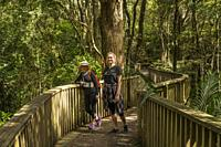 Two women on a walk in the Whangarei Scenic Reserve; Tikipunga; North Island; New Zealand;.