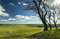 Early spring at Chanctonbury Ring, prehistoric hillfort in South Downs National Park, West Sussex, England.