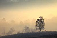 Tree's on the northern slopes of Mogshade Hill in the New Forest National Park, captured at sunrise on a misty morning in mid April.