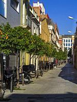 Orange trees bearing oranges on narrow street in Poble Nou district of Barcelona, Catalonia, Spain, Europe.