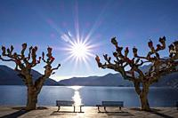 Waterfront with Bare Trees and Benches with Sunbeam and Mountain in Ascona, Switzerland.