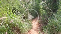 Walk through the forest on Cape Promthep, Phuket, Thailand