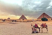 Complex of Giza Pyramids and the Sphinx in the desert with camels, Egypt.