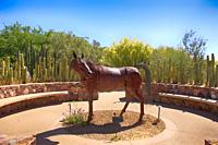 The metal sculpture of a horse in the Cactus Courtyard at Tohono Chul Park in Tucson, AZ.