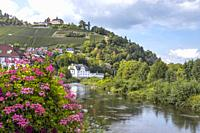 the river Murg and vinyards with castle Eberstein, Germany, town of the Northern Black Forest in the Murg valley, district Gernsbach-Obertsrot.
