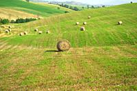 In the Tuscan countryside in the summer during the hay harvest.