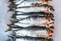 Fresh sardines on ice on display in fish shop / fish market