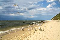 seagulls at the baltic beach in Miedzyzdroje, Wolin Island, West Pomeranian, Poland, Europe.