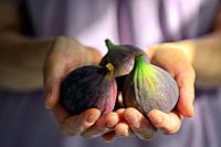 Fresh Figs Holded By Woman Hands.