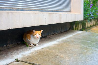 A Stray Cat on the street in Jackarta city, Indonesia. Jakarta is the biggest and main city in Indonesian islands.