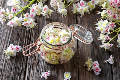 Preparation of herbal tincture from blooming horse chestnut.