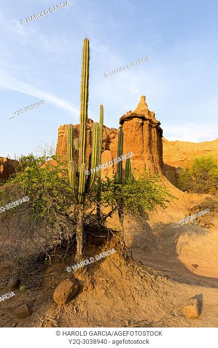 View Of Tatacoa desert red zone with blue sky and green cactus, Huila, Colombia
