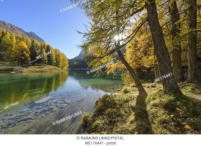 Mountain lake with larch trees in autumn, Preda, Lake Palquognasee, Lai da Palquogna, Albula-Pass, Grisons, Switzerland, European Alps