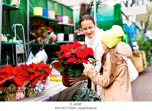 Woman with daughter looking at flowers of Euphorbia pulcherrima for Xmas. Focus on woman