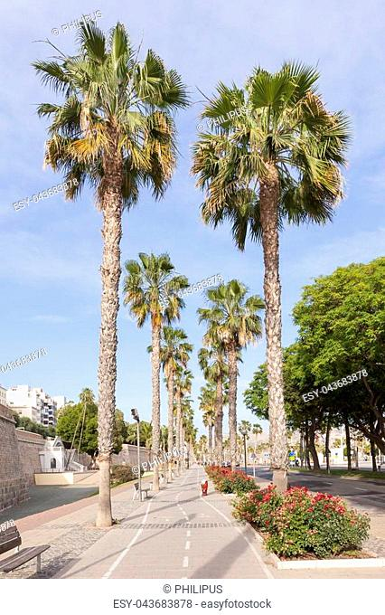 Palm trees at the promenade of Cartagena. Province of Murcia, Spain
